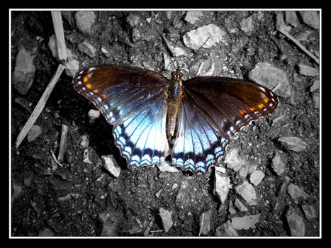 Beautiful Butterfly 2