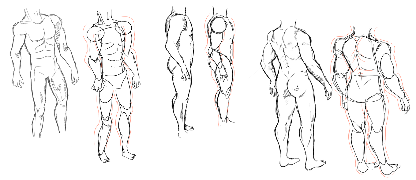 male anatomy practice by maggikarp on DeviantArt