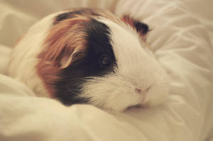 Lazy Day by Guineapigrage