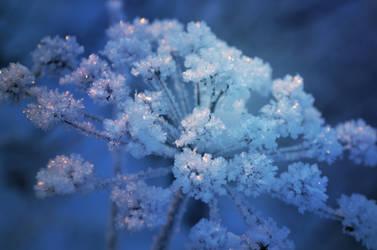 Frozen by Guineapigrage