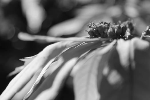 Mono Flower