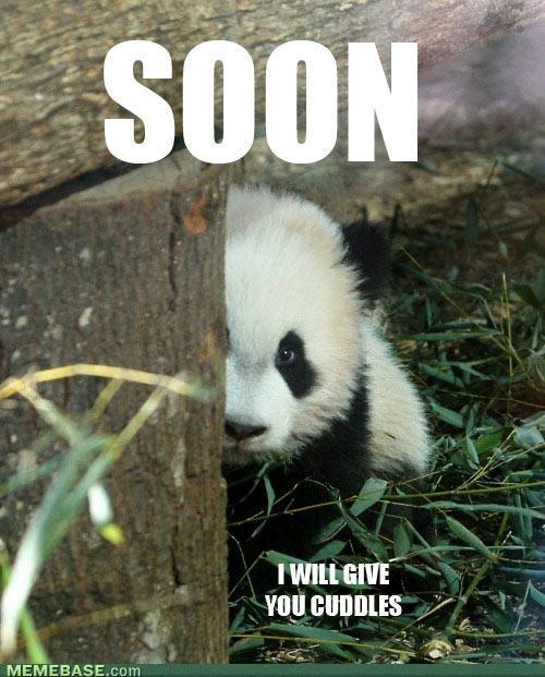 Panda meme how about no - photo#7