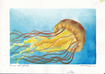 Brown Nettle Jellyfish by hans-sniekers-art