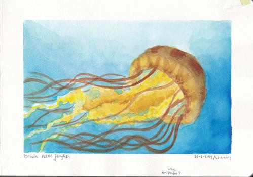 Brown Nettle Jellyfish