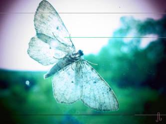Moth by pyraptor