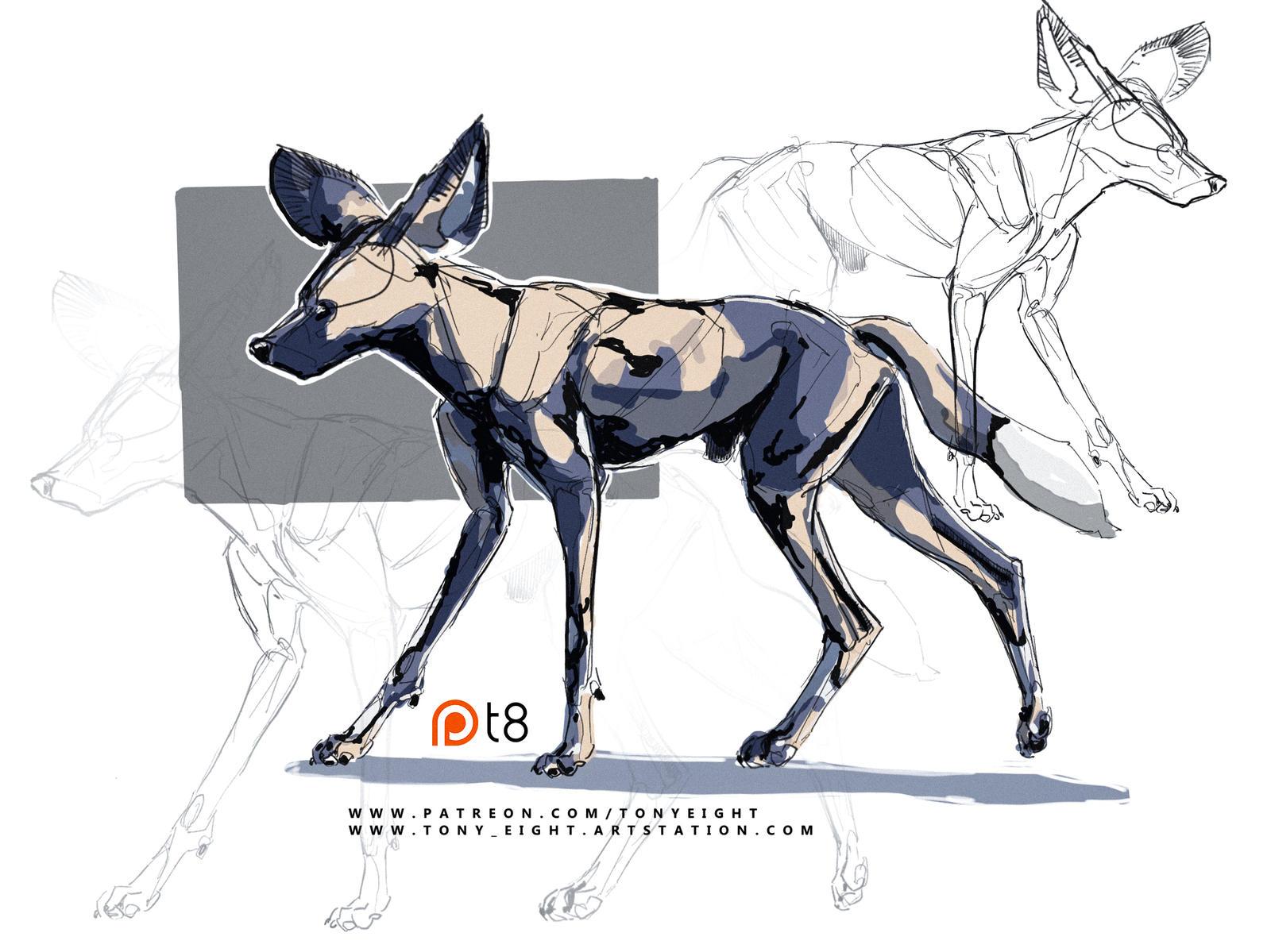 Patreon - African Wild Dog sketch 09 by T-Eight on DeviantArt