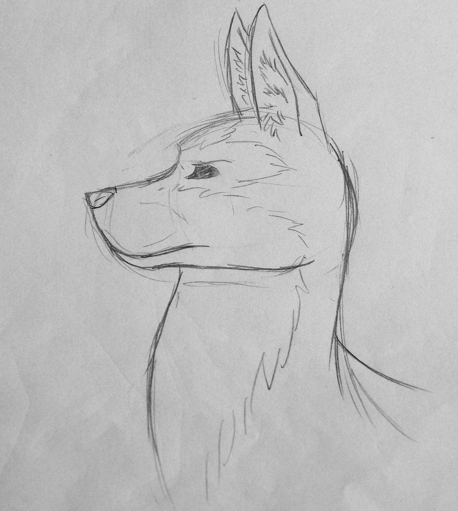 Line Drawing Of A Dog S Face : Dog head sketch by redbell on deviantart
