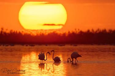 Sunset with flamingo