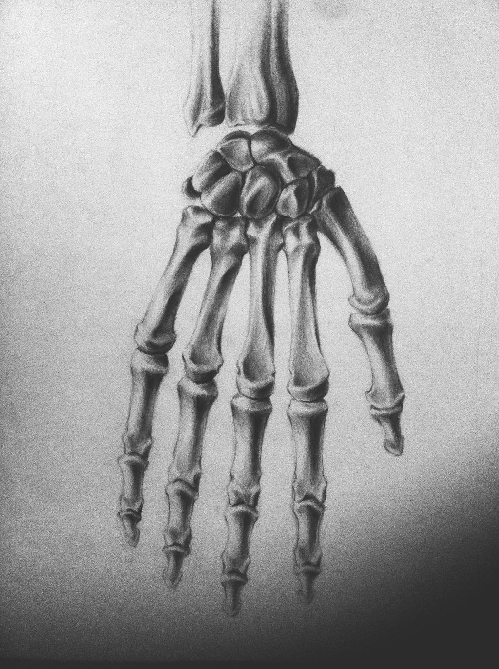Hand Bones Anatomy By Peepholee On Deviantart