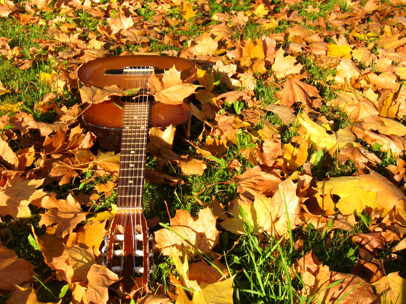 Guitar in leaves  by Johnnatan Photography Guitar