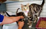 Pound Cats 2259 by sydneypetography