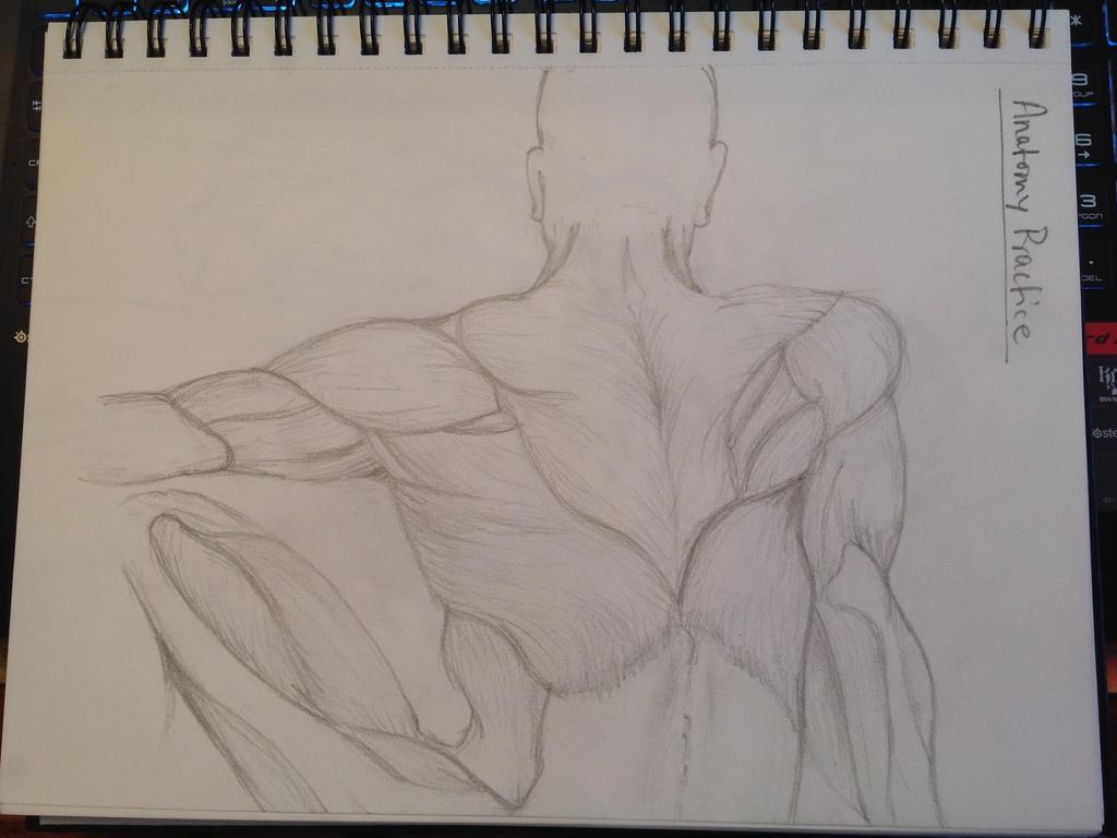 AnatomyPractice by silvercubecs