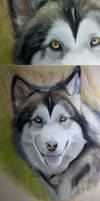 Pastel Wolf WIP 3