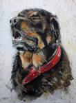 Pastel Rottweiler Tyson