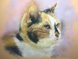 RN Puddy cat