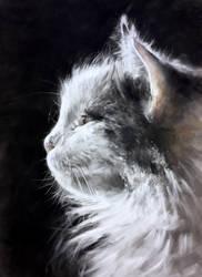 Pastel cat gaze
