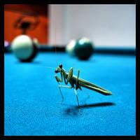 Playing Mantis by greenie