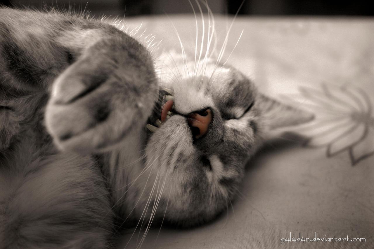 Sweet dreams by g4l4d4n