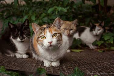 Neighbourhood's cats by g4l4d4n