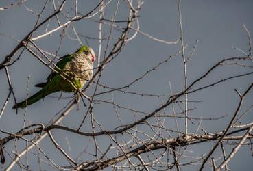 Winter Parrot by g4l4d4n