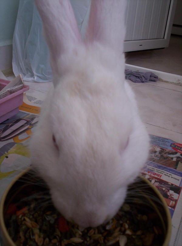 el conejo by ecmelita
