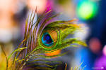 the shimmering feather of a peacock