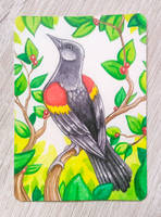 ACEO - Red-winged blackbird
