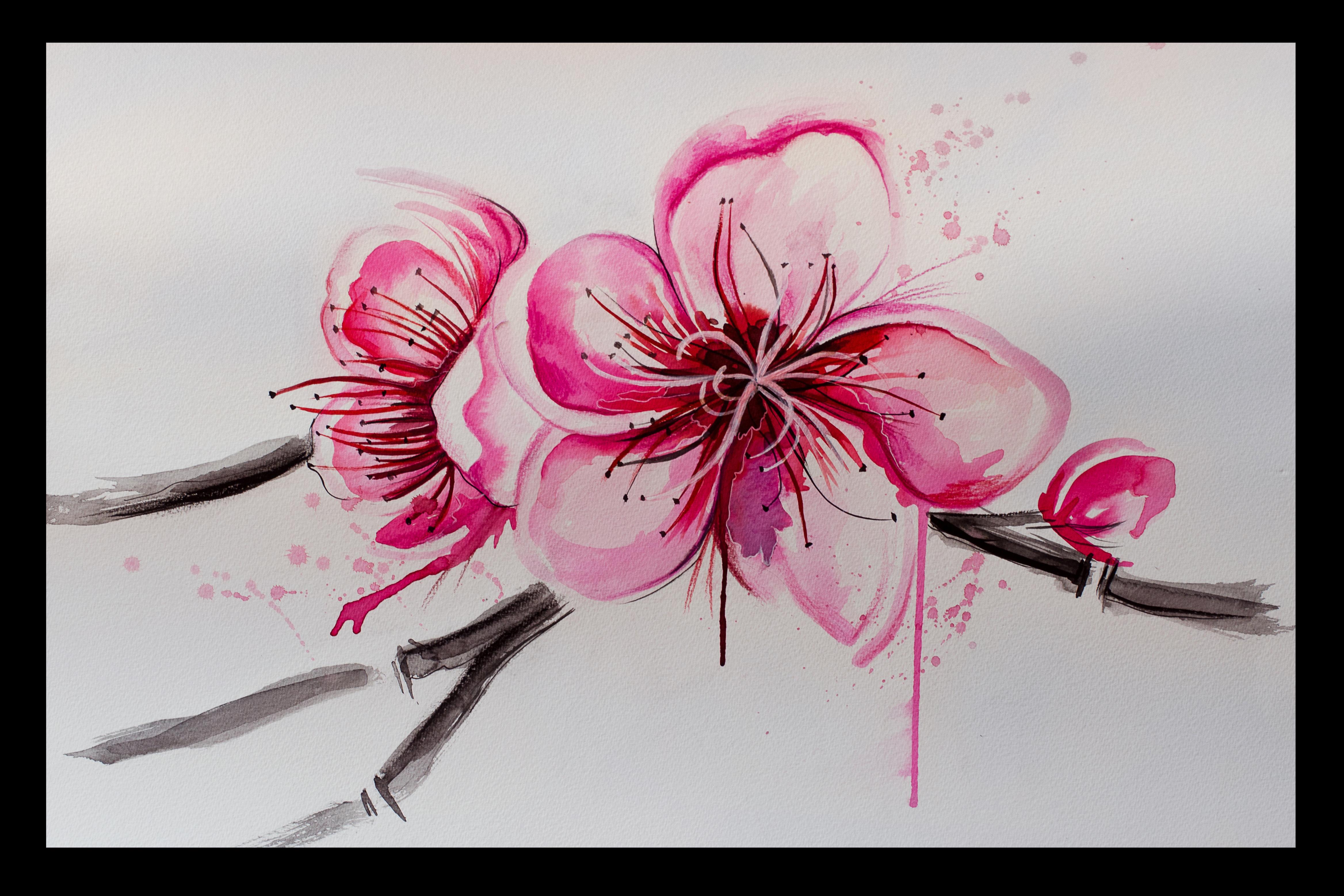 Pin Sakura flower drawing wallpapers on Pinterest