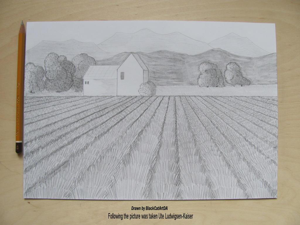 Lavender fields by BlackCatArtDA