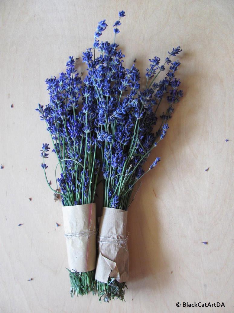 Fresh lavenders  by BlackCatArtDA