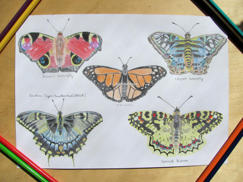 Butterfly collection  by BlackCatArtDA