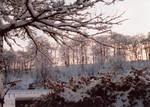 Winter in Fyvie 1