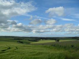 Barley In The Breeze - 2 by Zelandeth