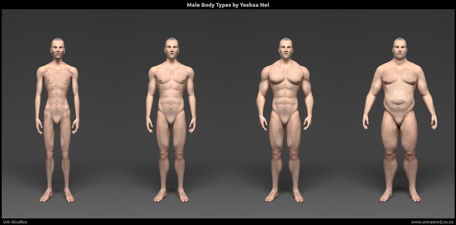 Male body types - financeandbusiness