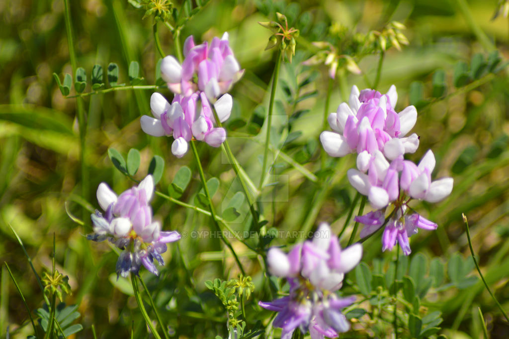 Purple Wildflowers by CypherLx