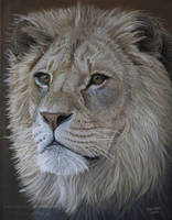 Lion Portrait by Vawie-Art