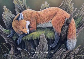 A Bed of Moss by Vawie-Art