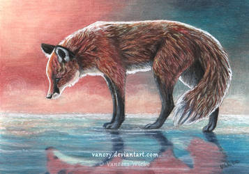 Red Reflection - Red Fox by Vawie-Art