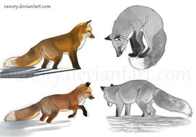 Fox Sketches 2 by Vawie-Art