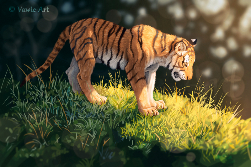 Young Tiger by Vawie-Art