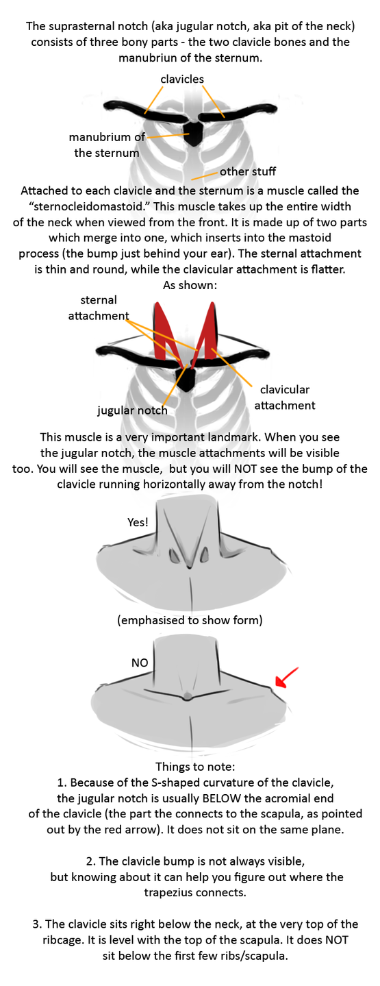 Anatomy Tip: The Neck by Brainmatters