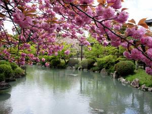 The Garden of Toji - Yon