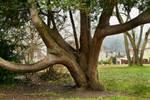 tree trunk 05