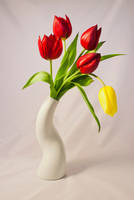 Tulpe 03 by NellyGraceNG