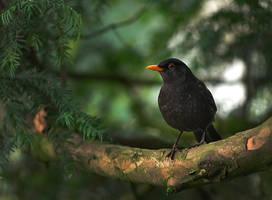 Blackbird 01 by NellyGraceNG