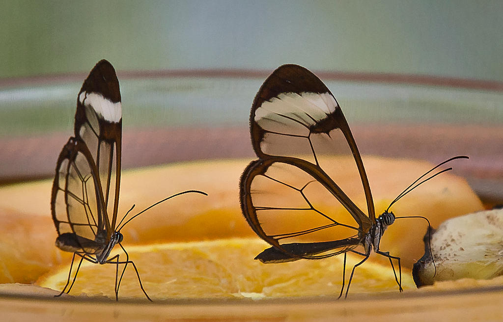 Butterfly Stock 09 by NellyGrace3103