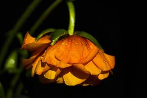 flower yellow 03