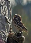 Owl Stock 02