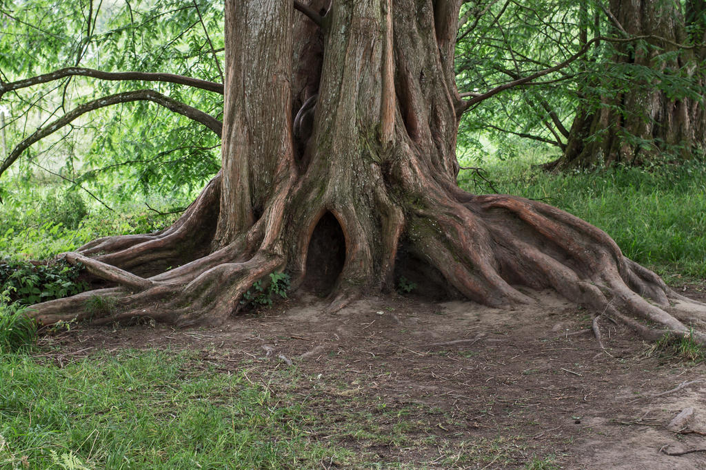 tree trunk 13