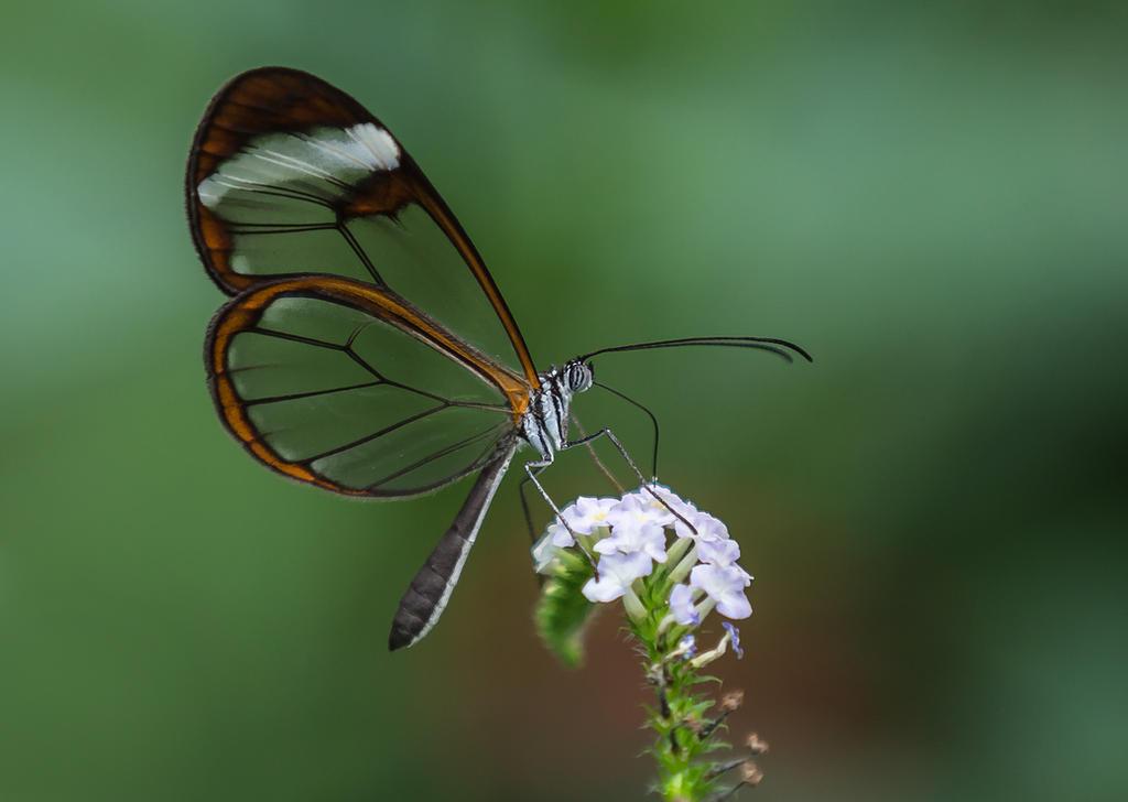 Butterfly Stock 23 by NellyGrace3103